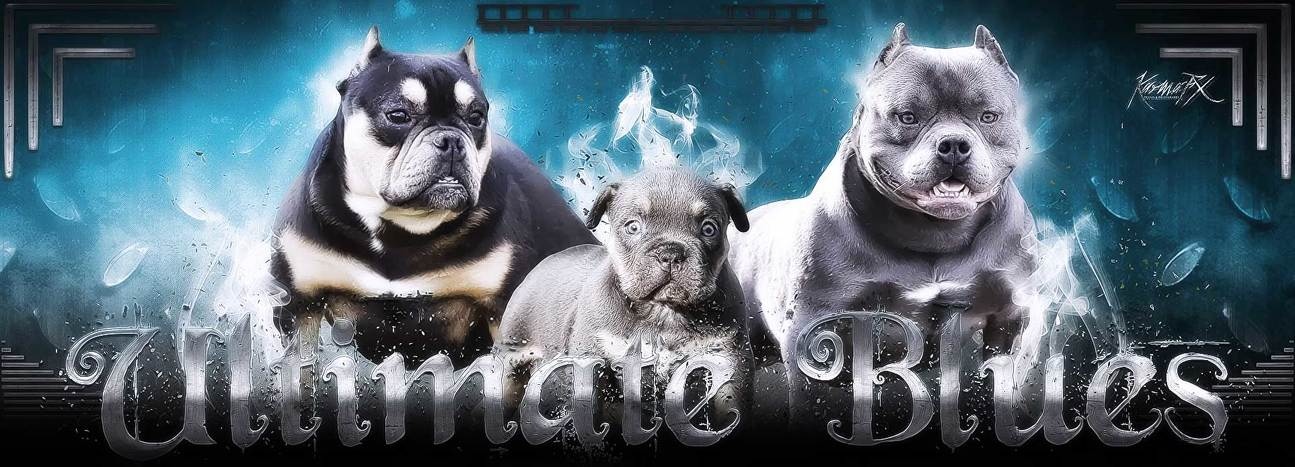 Ultimate Blue Pitbulls | Pitbull Puppies for sale | American